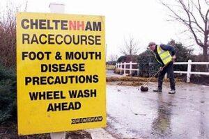 Cheltenham racecourse foot & mouth